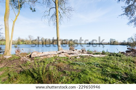 Felled trees on the shore of a small lake on a sunny day in the fall season. - stock photo