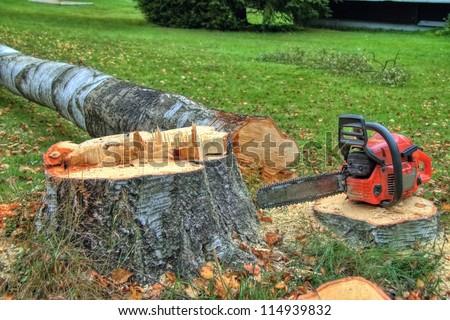 felling of trees - stock photo