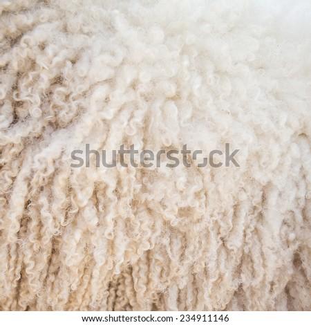 Felt sheep wool close-up background - stock photo