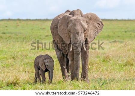 Female African elephant and calf standing next to it in it's shadow at Masai Mara National Reserve, Kenya