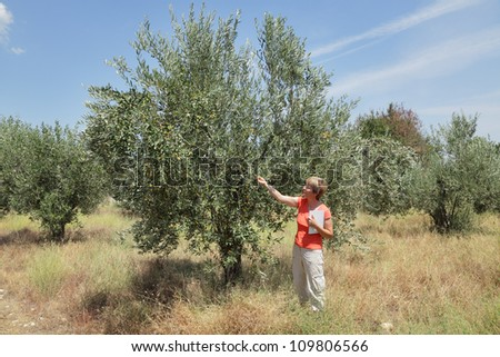 Female agricultural expert inspecting quality of olive tree in olives orchard