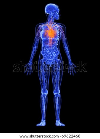 female anatomy - heart - stock photo