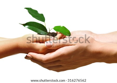 Female and child handfuls with soil and small green plant isolated on white - stock photo