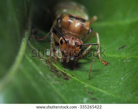 Female ant and her eggs - stock photo