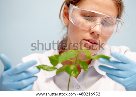 Female bio-scientist examining leaves of newly grown green plant
