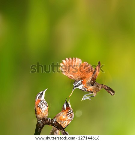 Female bird feeding a hungry baby - stock photo