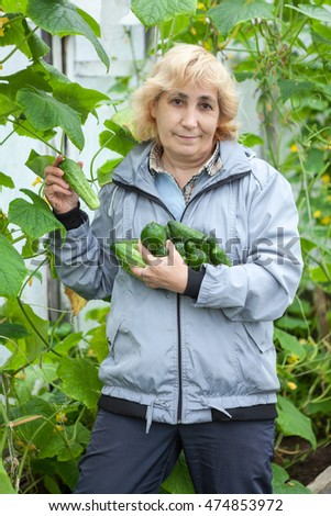 Female Caucasian gardener collects ripe green cucumbers from branch in the greenhouse in her arms