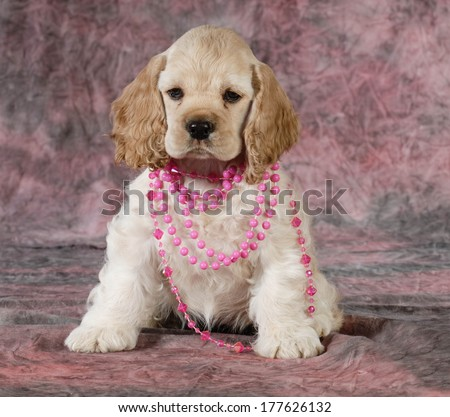 female cocker spaniel puppy wearing necklace on pink tone background - 9 weeks old - stock photo
