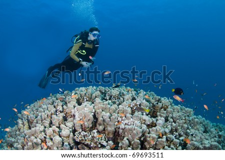 Female diver hovering over a huge coral in the Red Sea, Egypt - stock photo