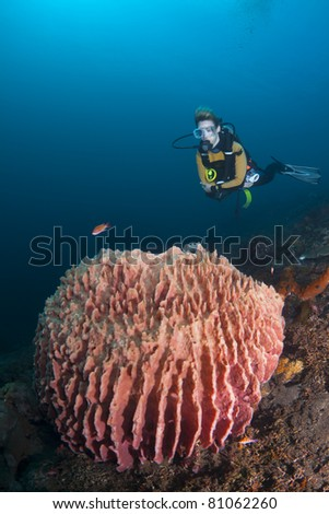 Female diver hovering over a large barrel sponge, at Bali, Indonesia - stock photo