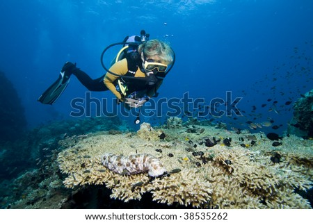 Female diver hovering over coral and fishes - stock photo