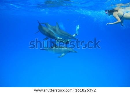 Female divers underwater with dolphin - stock photo