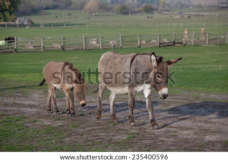 Female donkey with her young foal - stock photo