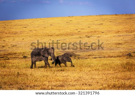 Female elephant and her calf roaming around the savannah in Africa