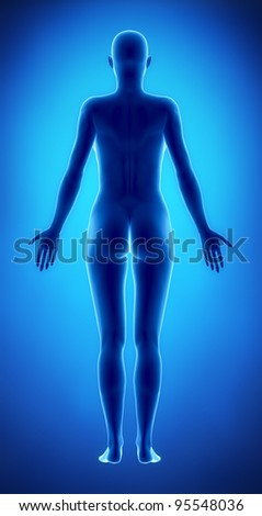Female figure in anatomical position posterior  view - stock photo