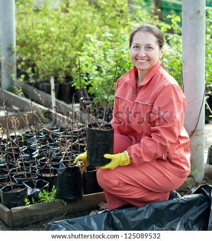 Female gardener chooses bush sprouts at market - stock photo