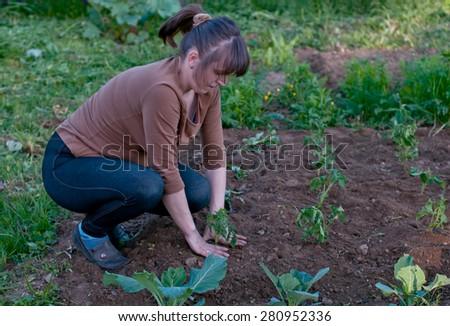 female gardener planting tomato spouts - stock photo