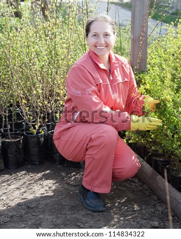 Female gardener with bush sprouts in pots