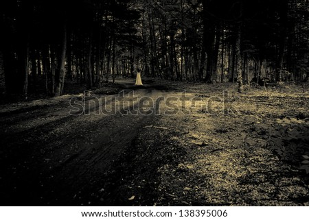 Female ghost in a forest - horror nightmare scene