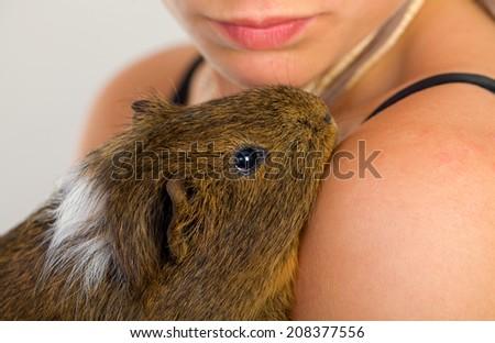 Female hand holding a beautiful guinea pig - stock photo