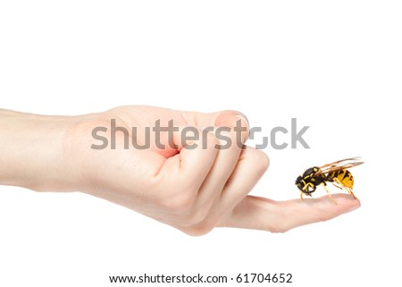 Female hand holding a big wasp, isolated on white background