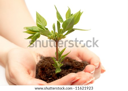 female hand holding a small tree over white - stock photo