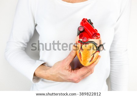 female hand holding human heart model in front of body - stock photo