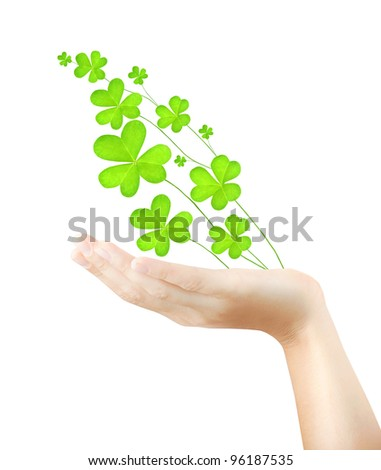 Female hand holds fresh clover plant, green spring leaves, shamrock branch isolated over white background, St. Patrick's day, holiday lucky symbol - stock photo
