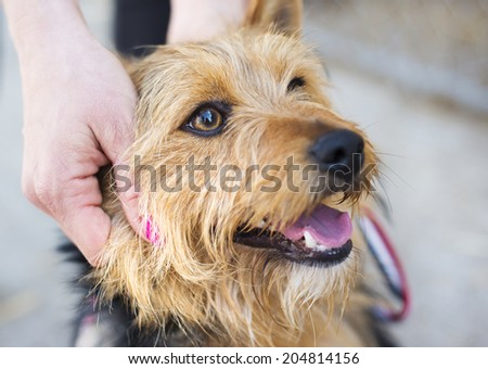 Female hand patting smiling brown dog head - stock photo