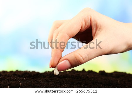 Female hand planting white bean seed in soil on blurred background - stock photo