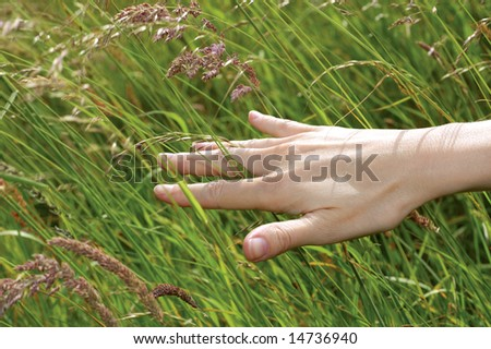 female hand stroking grass in summer meadow