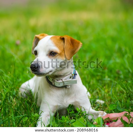 female hand stroking the dog in a city park, the summer season  - stock photo
