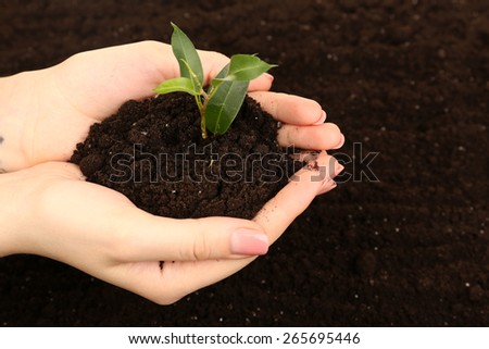 Female handful of soil with small green plant - stock photo