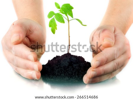 female hands hold the earth with the sprout - stock photo