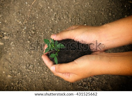 Female hands holding young plant in hands