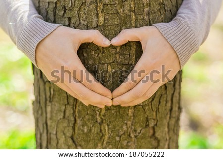 Female hands making an heart shape on a trunk of a tree. Great ecology concept - stock photo