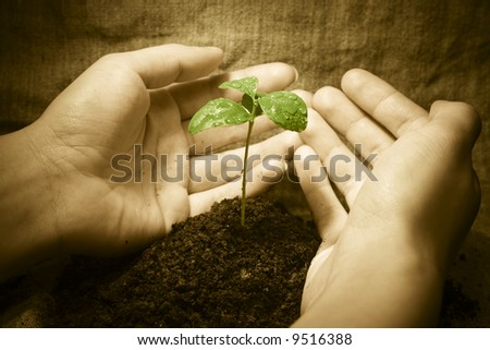 Female hands protecting a new green life. Vintage rural style image. Focus on plant - stock photo