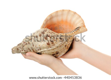 female hands with shell - stock photo