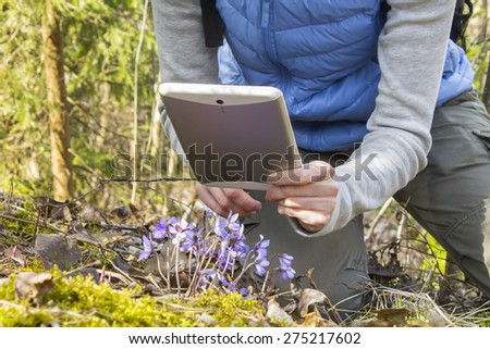 Female hiker is making photos of snowdrops using tablet PC. - stock photo