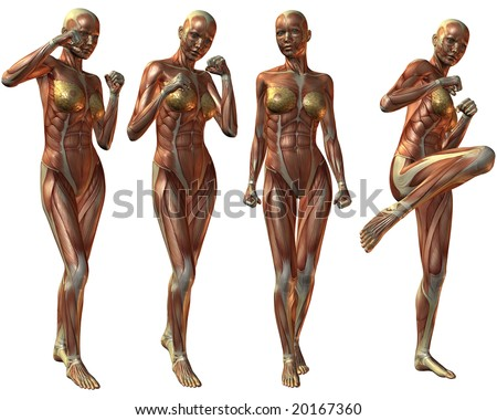 Female Human Body Anatomy