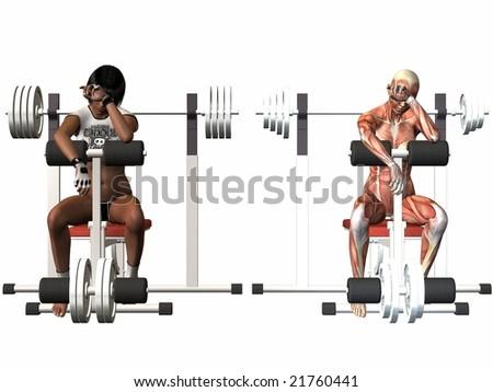 Female Human Body - Power Bench - stock photo