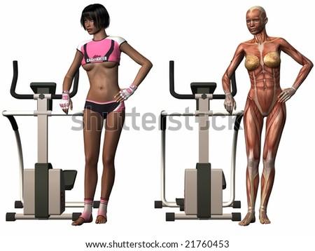 Female Human Body - Stepper - stock photo