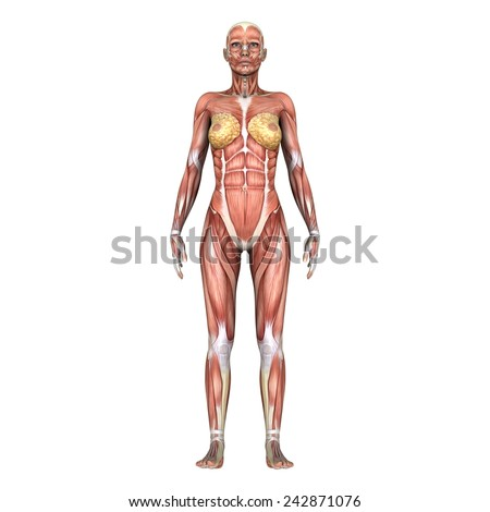 female lay figure - stock photo