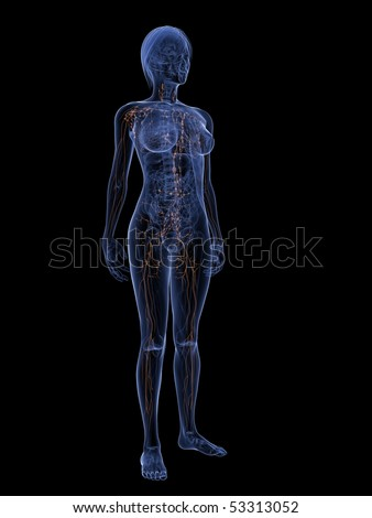 female lymphatic system - stock photo