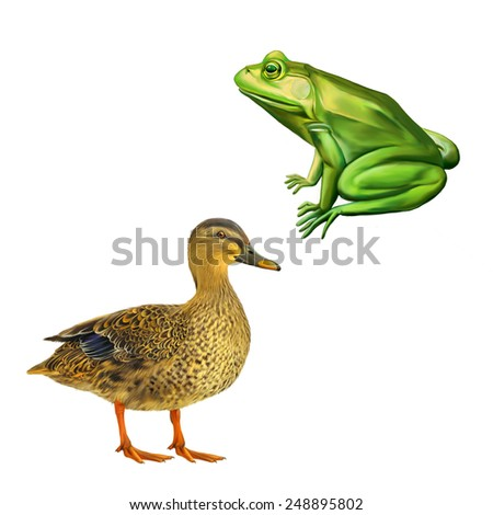 Female mallard duck, Green frog with spots, spotted toad, Isolated on white - stock photo