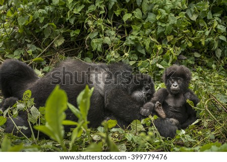Female mountain gorilla with her cute baby