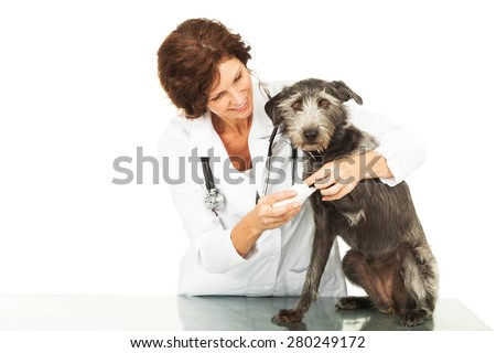 Female professional veterinarian doctor examining a mixed breed dog with an injury to his paw - stock photo