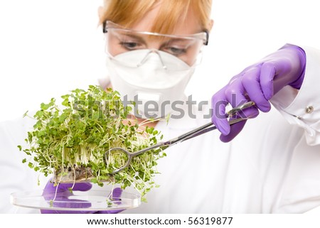 female scientist in goggles, gloves and mask looking carefully at plant sample, laboratory shoot, isolated on white background - stock photo