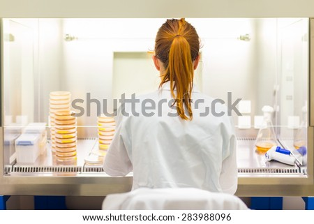 Female scientist researching in laboratory, pipetting cell culture medium samples in laminar flow. Life science professional grafting bacteria in the pettri dishes.  - stock photo