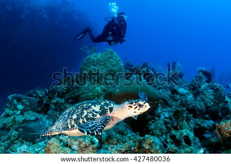 Female SCUBA diver and Turtle on a coral reef - stock photo